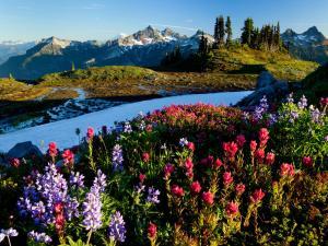 Alpine-Meadow-Tatoosh-Range-Mount-Rainer-National-Park-Washington