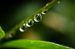 leaf_drops_by_adambettley-d3i1gon copy