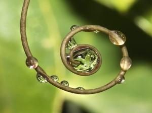 circle-of-life_43351