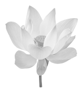 bigstock-Lotus-Flower-49877429