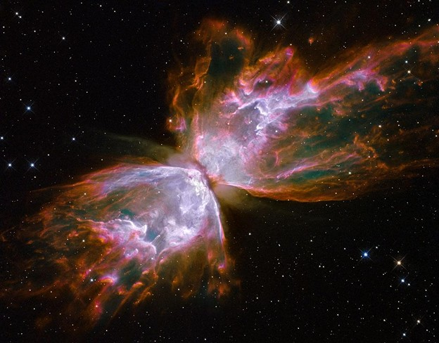 butterfly+universe