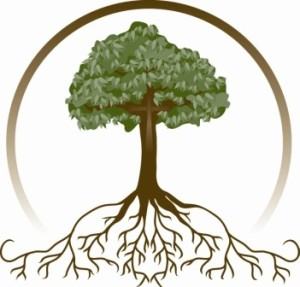 tree-roots 1