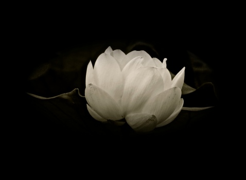meditate 3