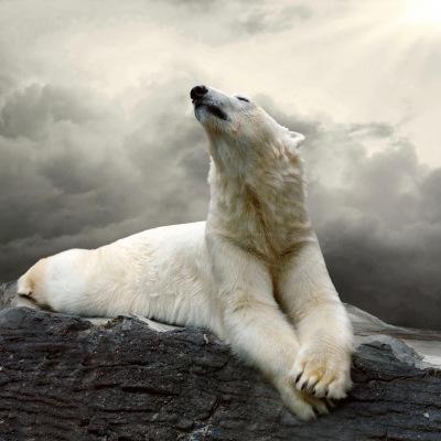 bigstock-White-Polar-Bear-Hunter-on-the-38811940